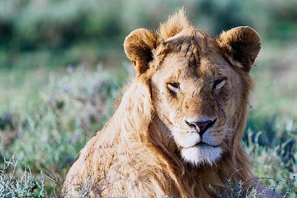 Fotoreise_Fotosafari_Afrika_Tansania_Benny_Rebel_DSC0056
