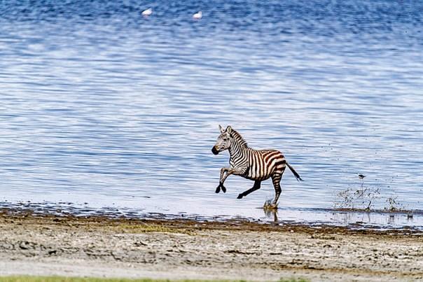Fotoreise_Fotosafari_Afrika_Tansania_Benny_Rebel_DSC0754