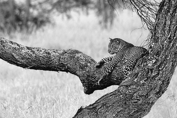 Fotoreise_Fotosafari_Afrika_Tansania_Benny_Rebel_DSC3034