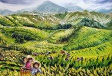 La cueillette du thé dans les Camerons Highlands ( Malaisie )