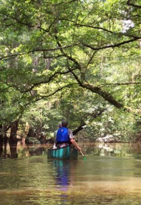 29ed3-cong_kayak2 Congaree National Park - The Park That Is Not A Swamp