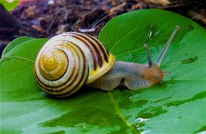 snail-1124028_960_720 Shenandoah National Park: Road on the Ridge