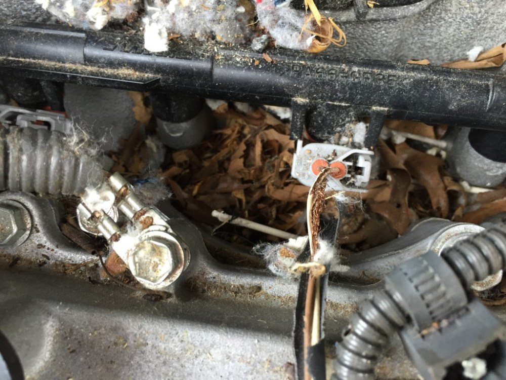 medium resolution of rodent damage damaged wiring harness