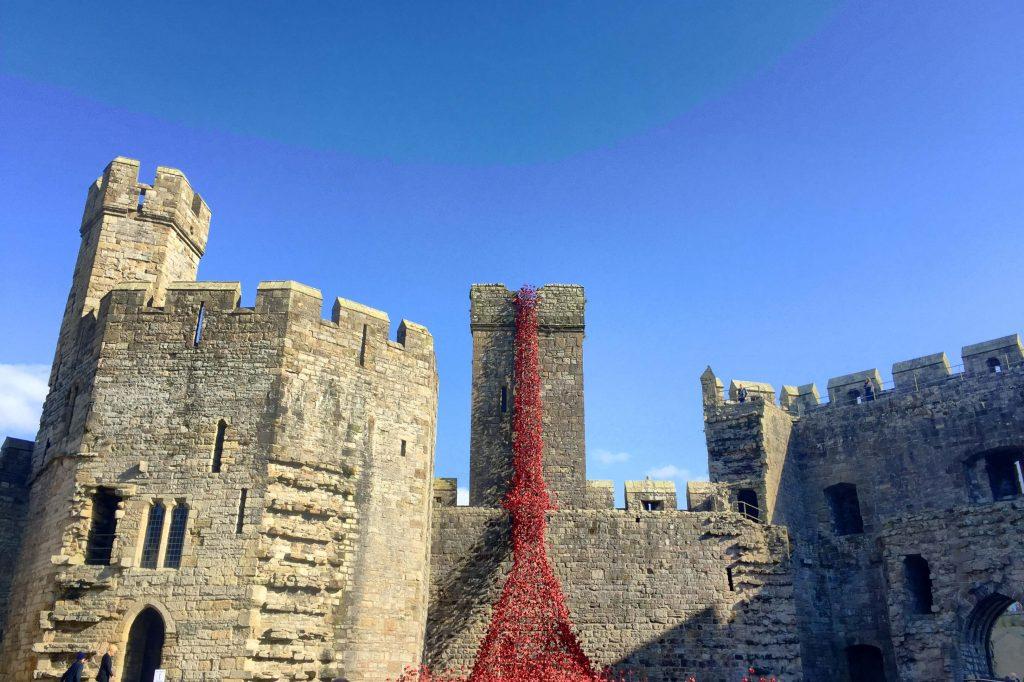 caernarfon-castle-poppies-in-wales-1