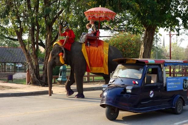Eléphant à Ayutthaya