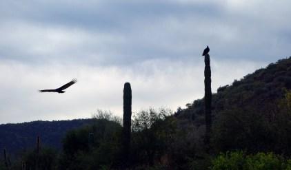 Les vautours sont partout ici