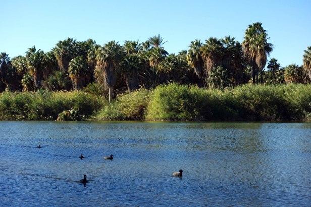 San Ignacio oasis