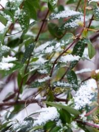 Winter im Januar