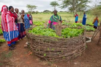 Simanjiro_Maasai Women's Gardens 065