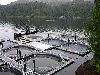 salmon-farm