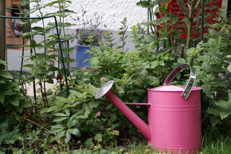 Giesskanne im Garten (Bildassistent: Standard)
