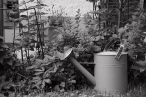 Giesskanne im Garten (Bildassistent: Klassisch)