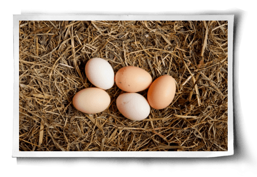 organic eggs t foods