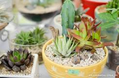 The Green House Project beautifully puts together indoor plants to help greenify your home