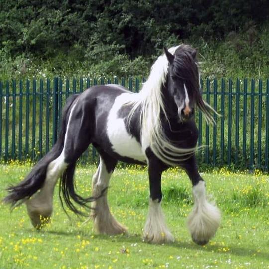 Appleby horse vet