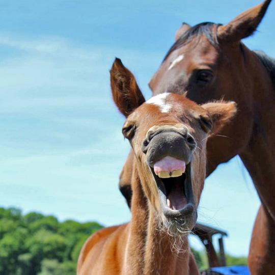 Horse vet Cumbria