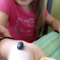 The Roly-Poly pet!