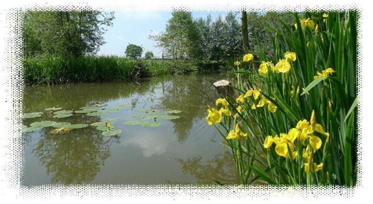 lilies tetley angling