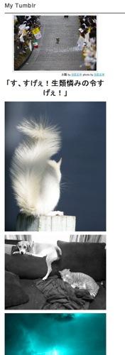 WordpressにTumblrの画像を表示するプラグイン「Tumblr Recent Photos Widget」を導入してみました