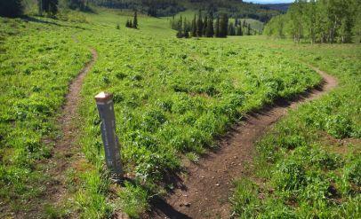 Grand Targhee Resort Trails - Quakie Ridge - 02