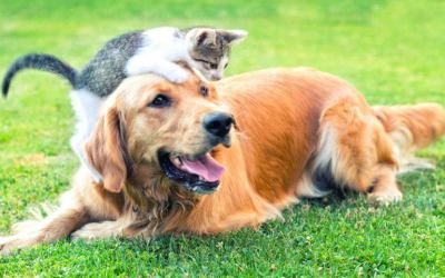 Radon and Your Pets