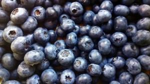 Bluberries1