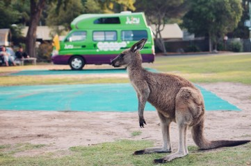 Australia_deLUX-1249