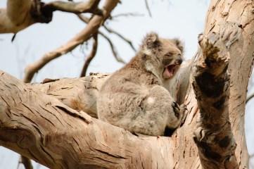 Australia_deLUX-5191