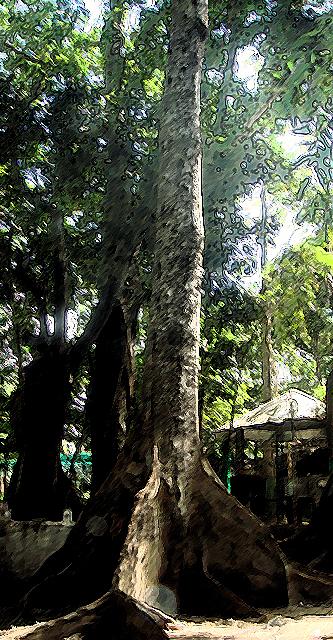 Trees Like Scuds