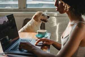 african american female freelancer with netbook near dog