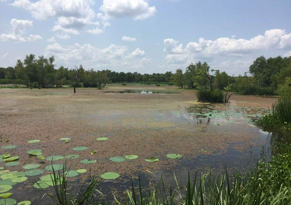 TfSP Board Meeting – 8/23 – Brazos Bend State Park