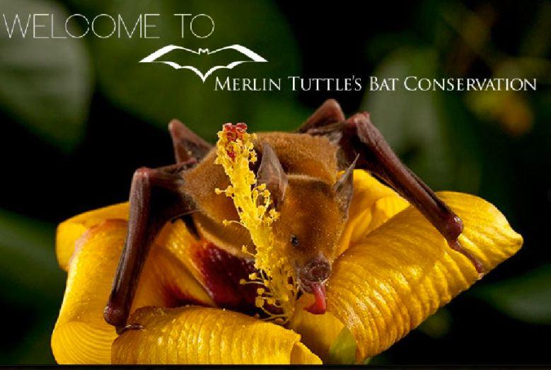 Merlin Tuttle website