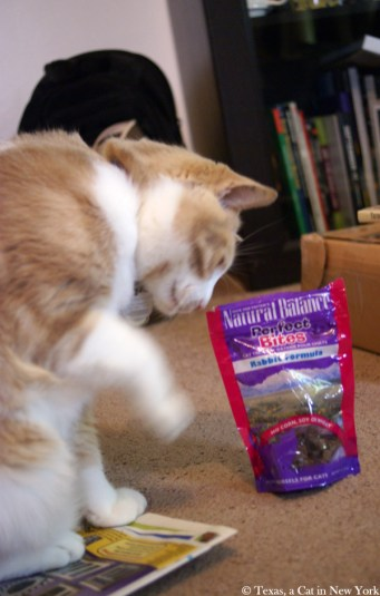 Texas a cat in New York, Natural Balance perfect bites, Natural Balance, BlogPaws