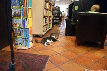 Park Slope Community Bookstore | Texas, a cat in... Austin