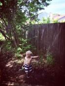 ezra with his tree