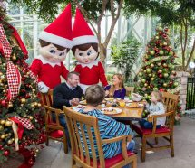 Elf On the Shelf Breakfast at Gaylord Palms