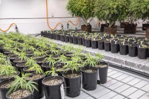 How Texas' new cannabis law is boosting business — slowly but surely — at one Austin company