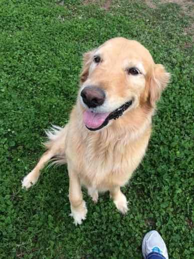 Texas Pet Company Avery Jane MegaEsophagus 2