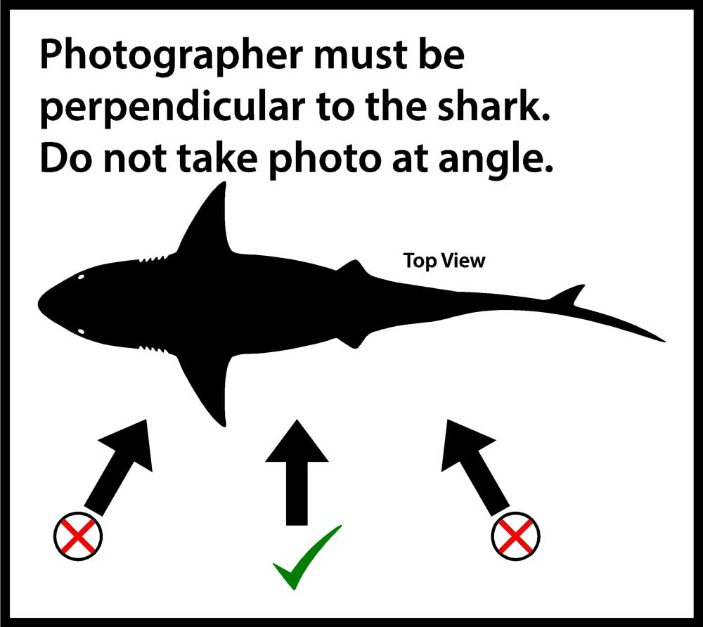 TSR Photo Rules & Requirements