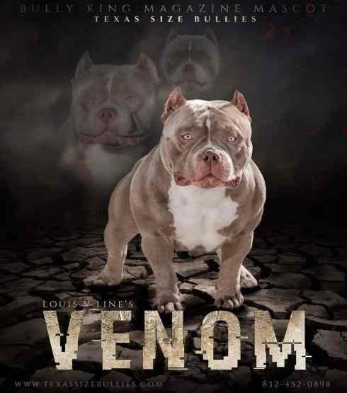 1style.Venom