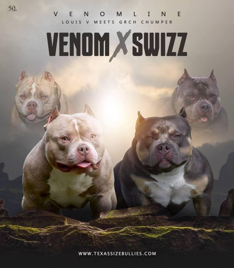 , New Upcoming Breedings 2019 | Top Pocket Bully Kennel, Venomline | Texas Size Bullies