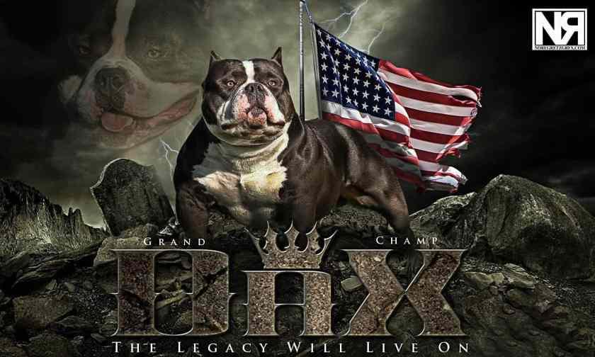 Daxline-Ed-Shepherd_Dax_American-Bully