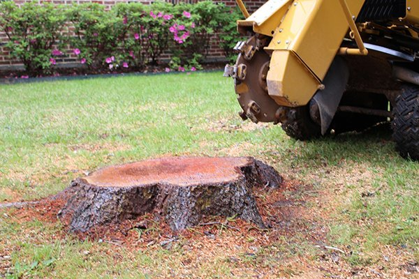 stump grinding in frisco