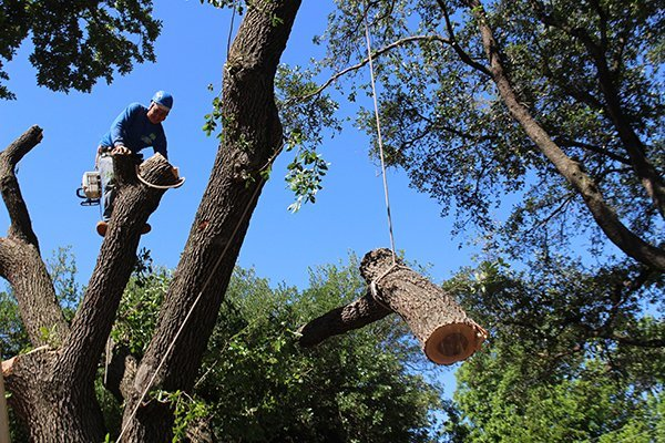 Tree branch being lowered