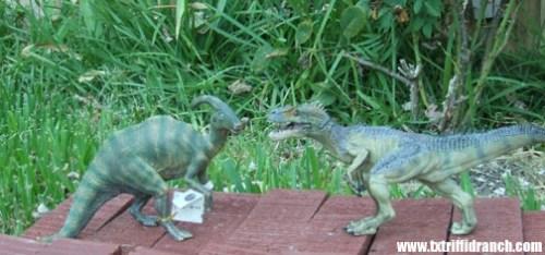 Papo dinosaurs