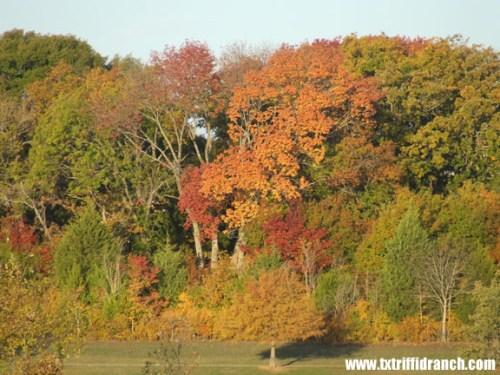 Closeup of autumn color