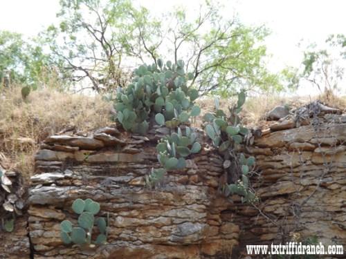 Quarry Wall 5