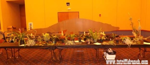 Greater Dallas - Fort Worth Bromeliad Society display