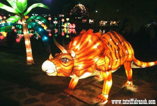 Chinese Lantern Festival - Triceratops