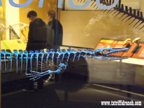 Dallassaurus skeleton
